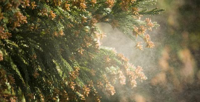 通年性アレルギー性鼻炎になる理由や症状